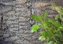 linha araucaria 100x25x2,5 cm